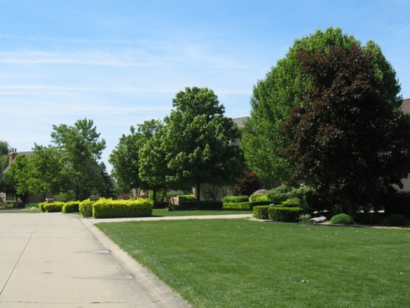 streets and manicured lawns
